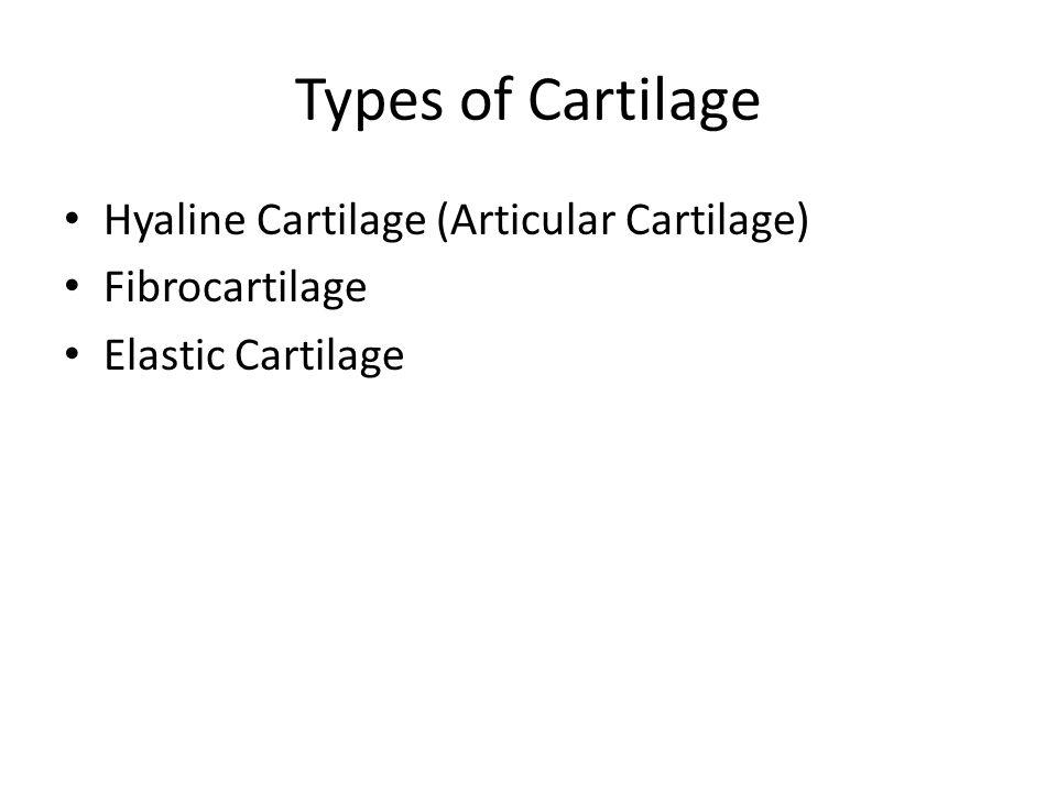 Types of Cartilage Hyaline Cartilage (Articular Cartilage)