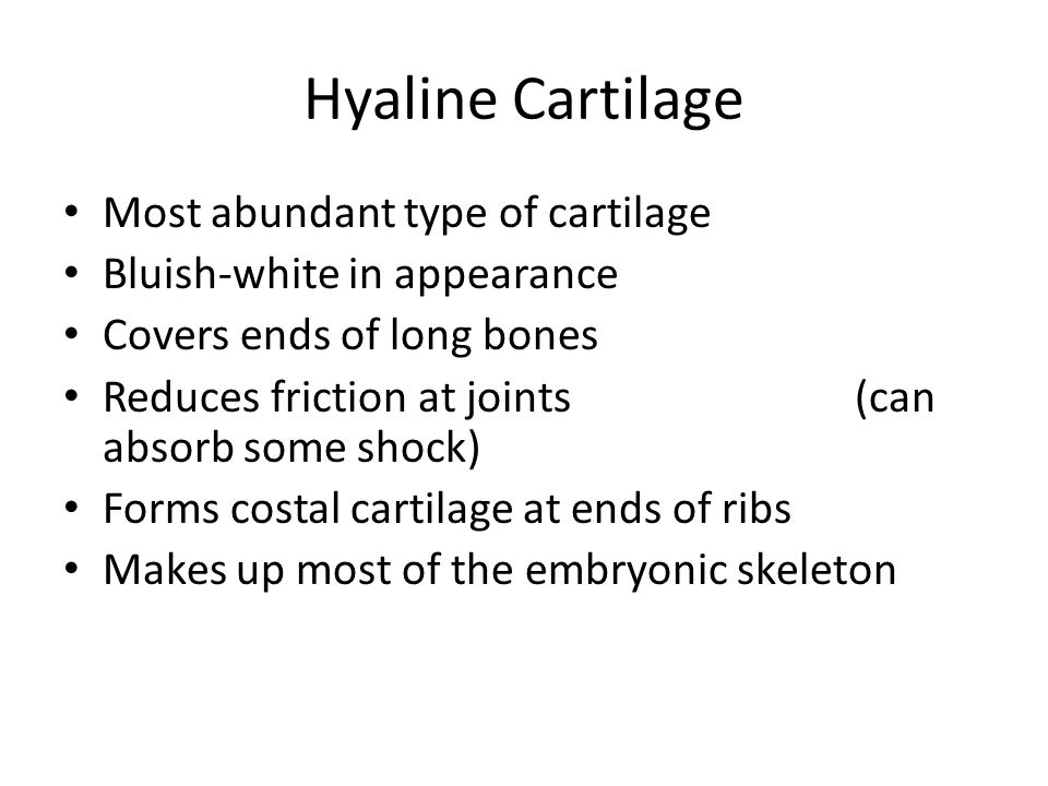 Hyaline Cartilage Most abundant type of cartilage