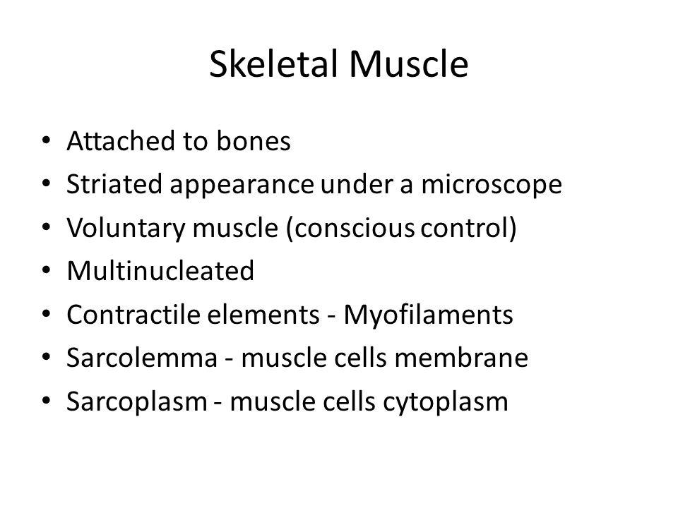 Skeletal Muscle Attached to bones
