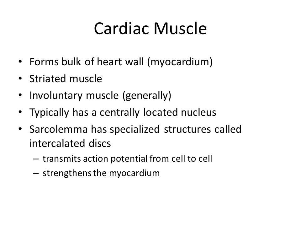Cardiac Muscle Forms bulk of heart wall (myocardium) Striated muscle