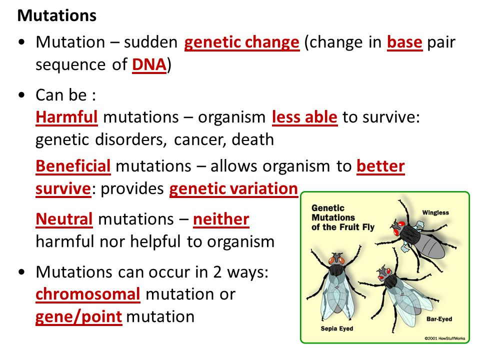 Mutations Mutation – sudden genetic change (change in base pair sequence of DNA) Can be :