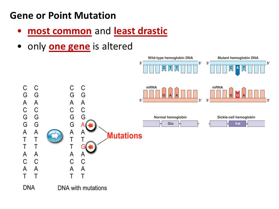 Gene or Point Mutation most common and least drastic only one gene is altered