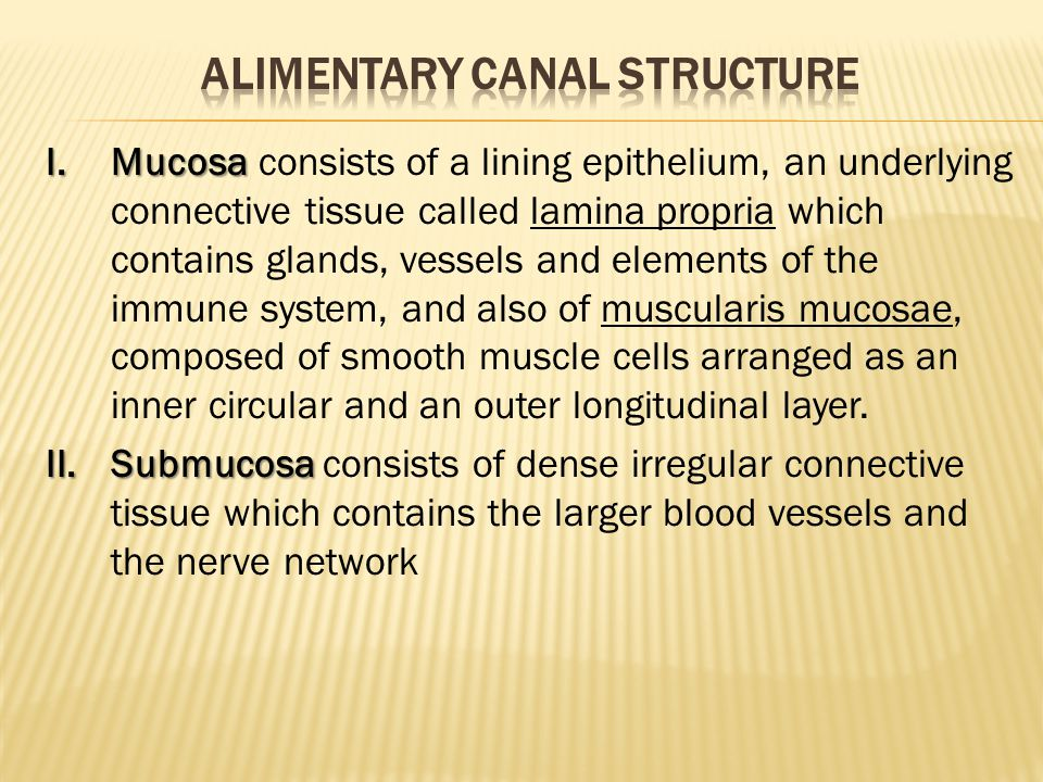 Alimentary canal structure
