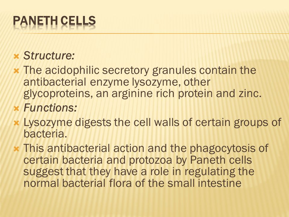 Paneth cells Structure: