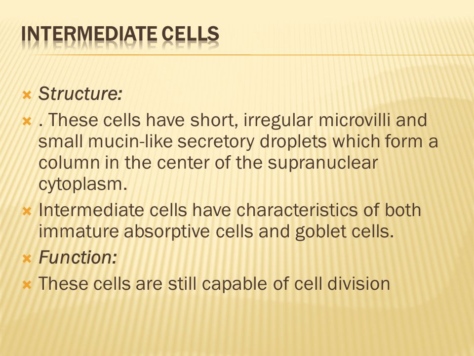Intermediate cells Structure: