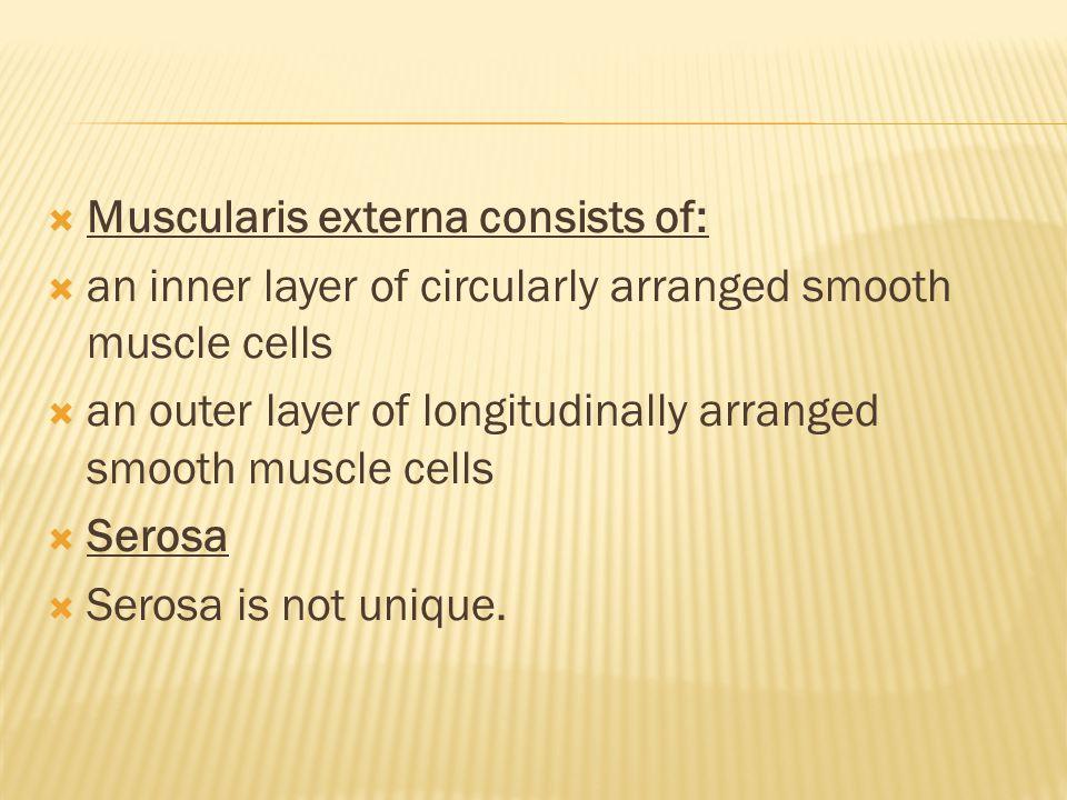 Muscularis externa consists of: