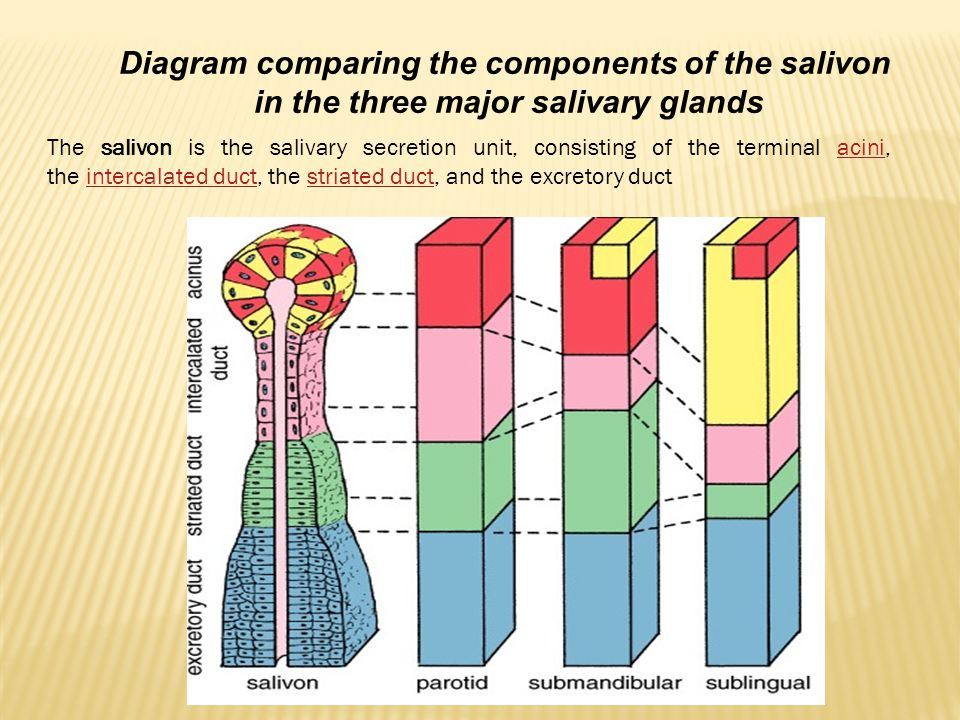 Diagram comparing the components of the salivon