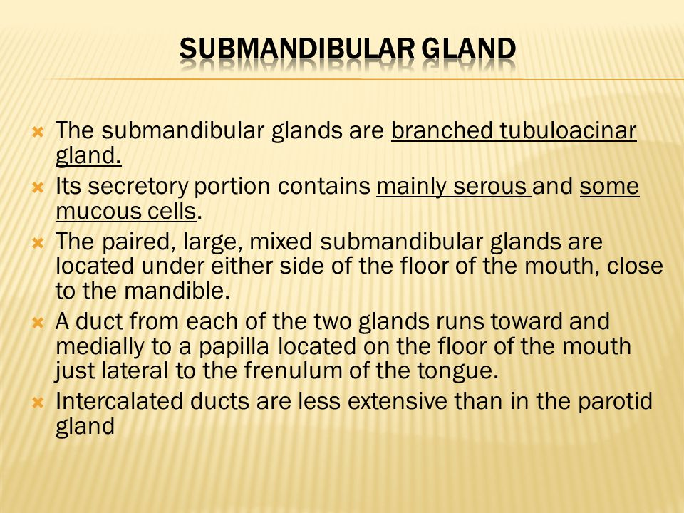 Submandibular gland The submandibular glands are branched tubuloacinar gland. Its secretory portion contains mainly serous and some mucous cells.