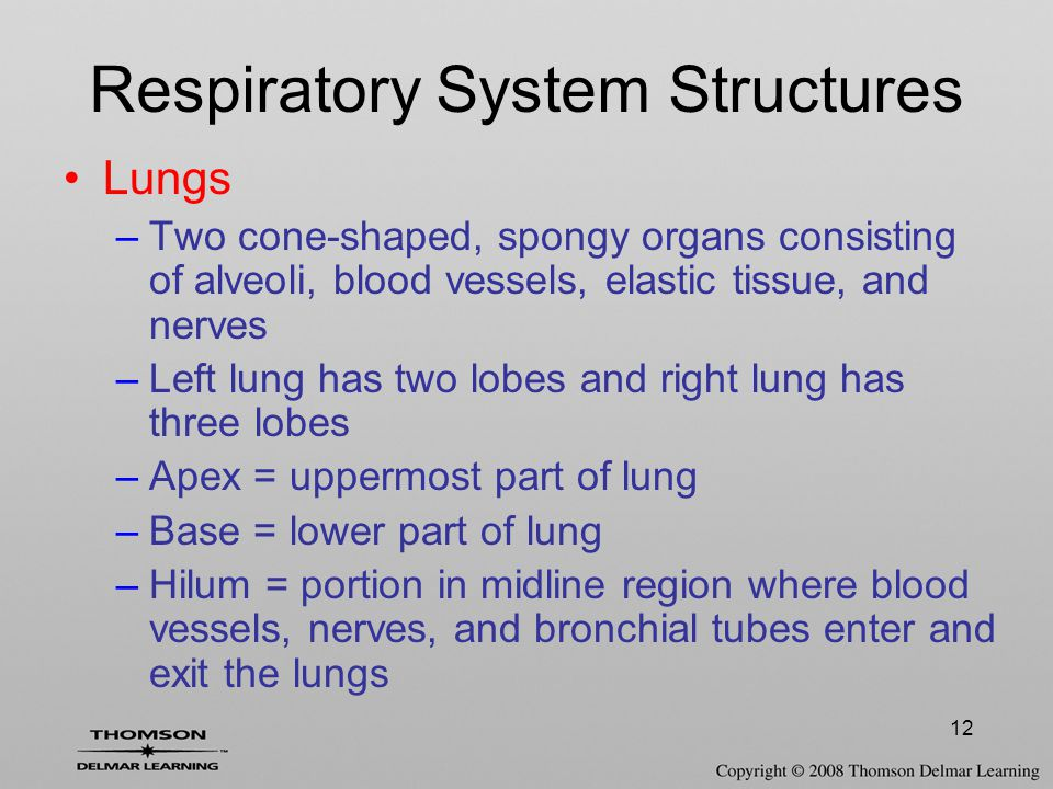 Respiratory System Structures