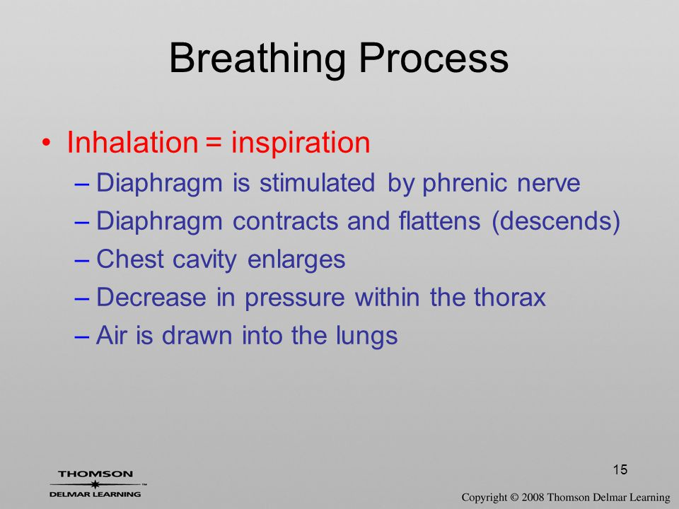 Breathing Process Inhalation = inspiration