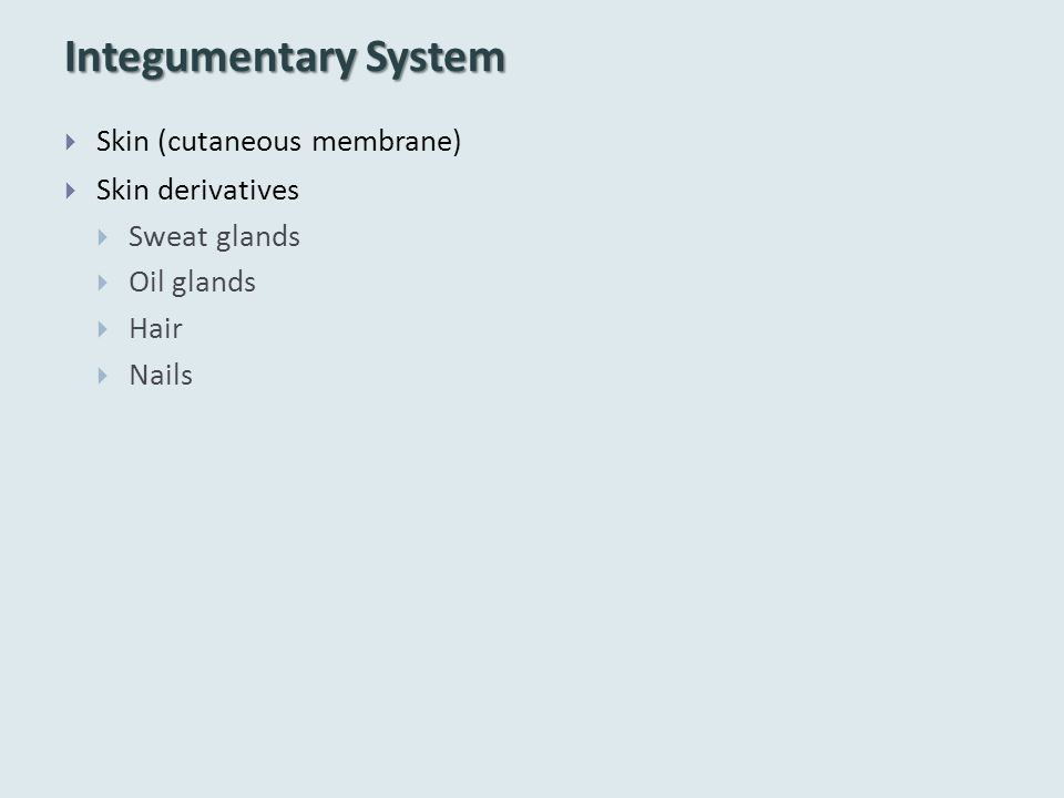 Integumentary System Skin (cutaneous membrane) Skin derivatives