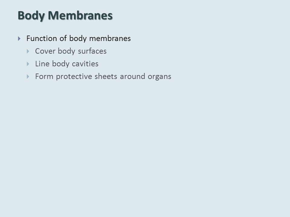 Body Membranes Function of body membranes Cover body surfaces