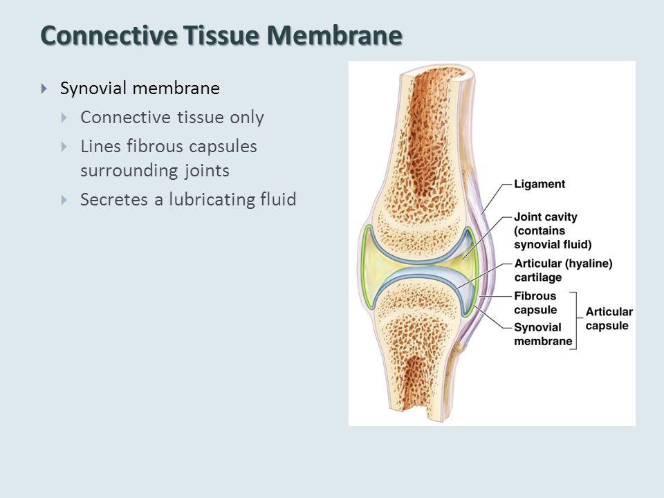 Connective Tissue Membrane