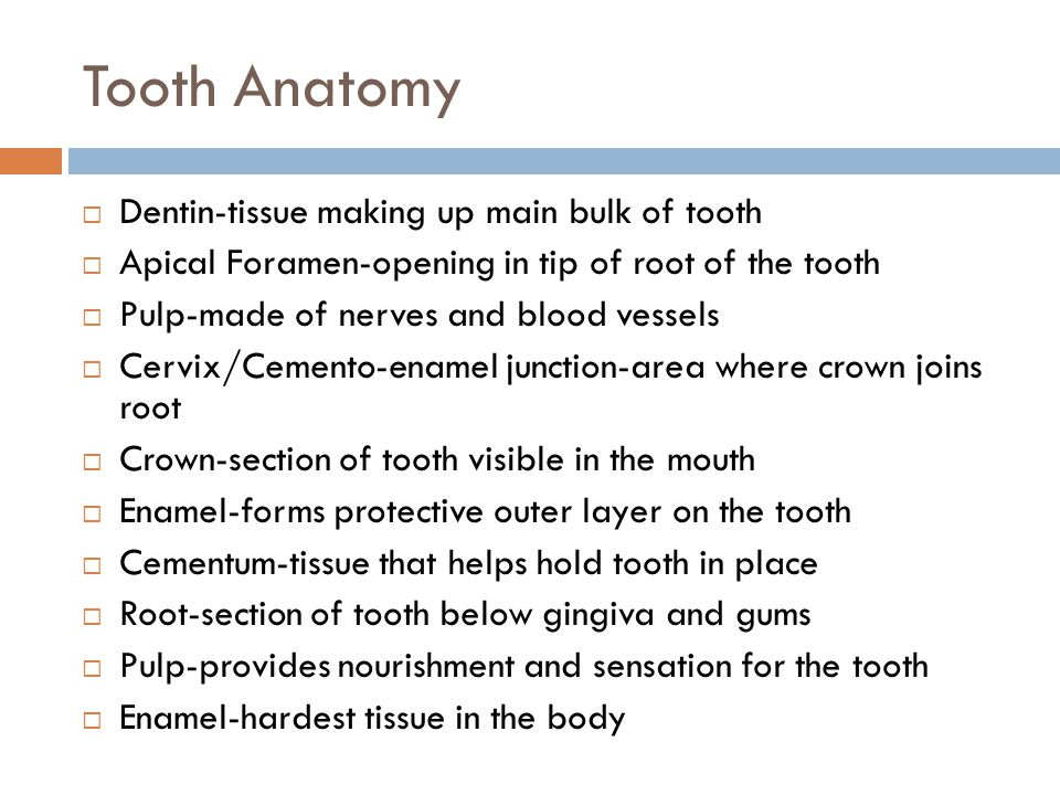Tooth Anatomy Dentin-tissue making up main bulk of tooth