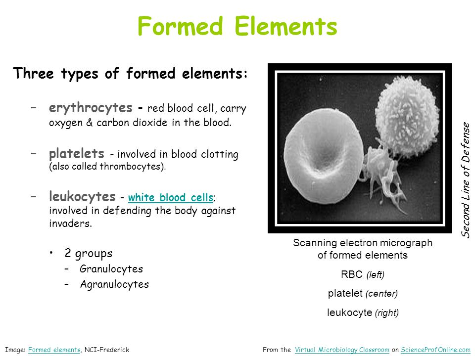 Scanning electron micrograph of formed elements