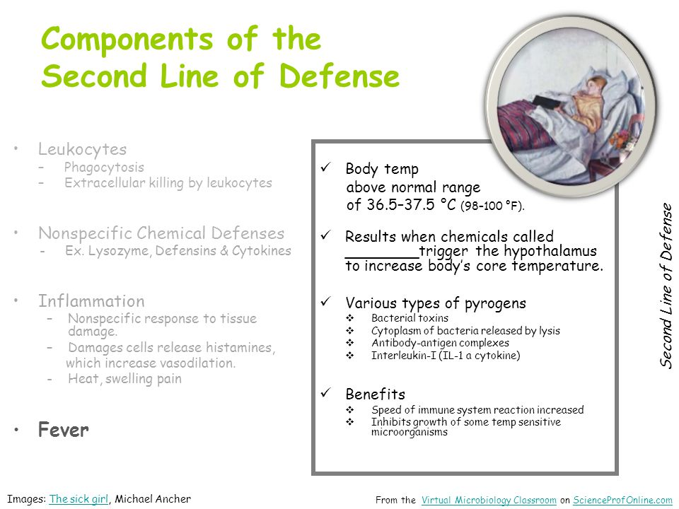 Components of the Second Line of Defense
