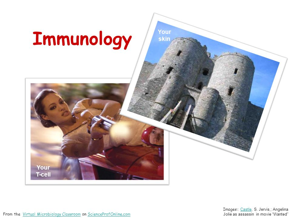 Immunology Your skin Your T-cell Your Skin pathogen pathogen
