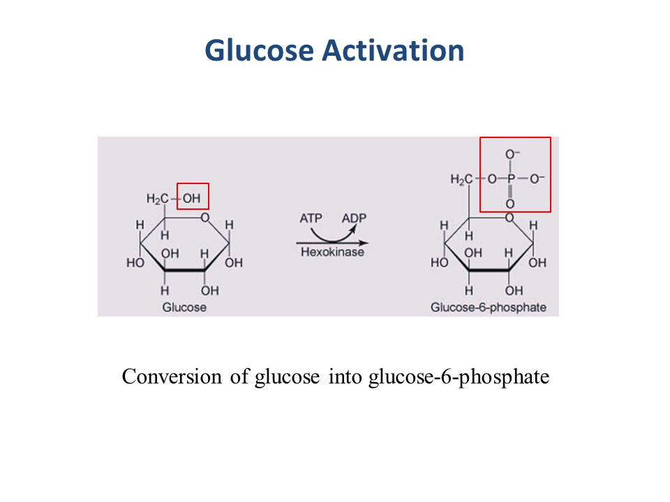 Glucose Activation Conversion of glucose into glucose-6-phosphate