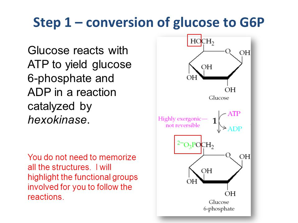 Step 1 – conversion of glucose to G6P