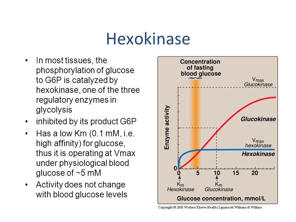 Hexokinase In most tissues, the phosphorylation of glucose to G6P is catalyzed by hexokinase, one of the three regulatory enzymes in glycolysis.