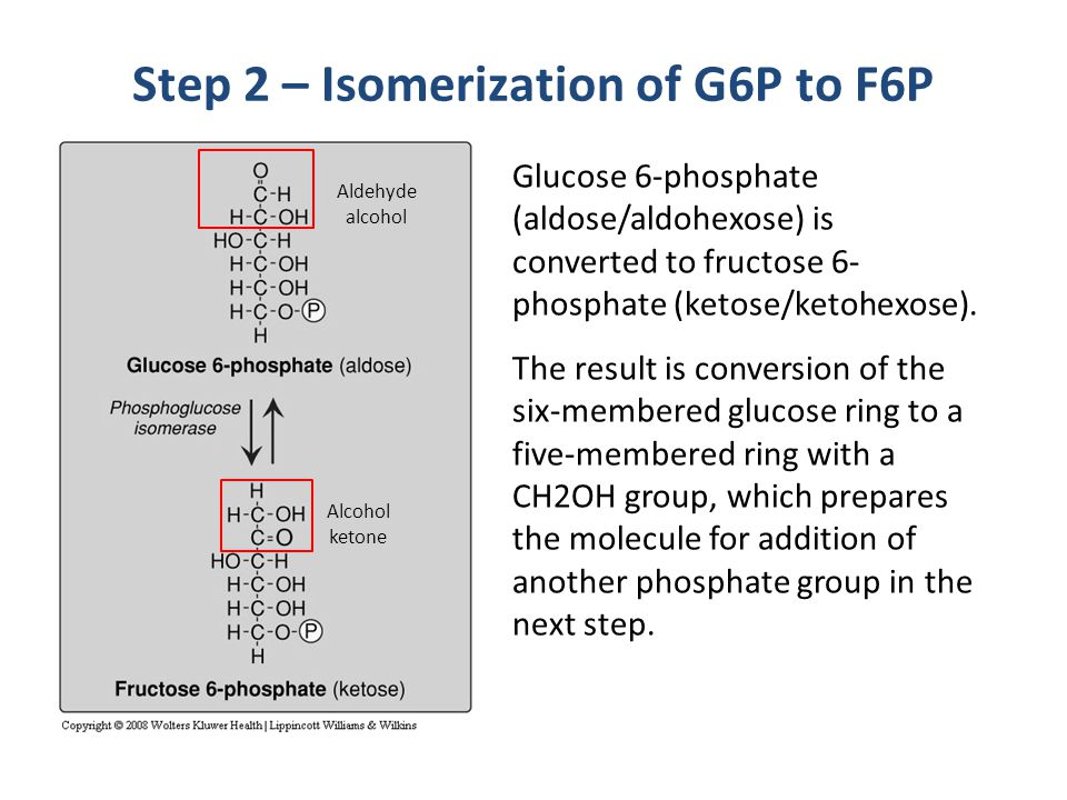 Step 2 – Isomerization of G6P to F6P