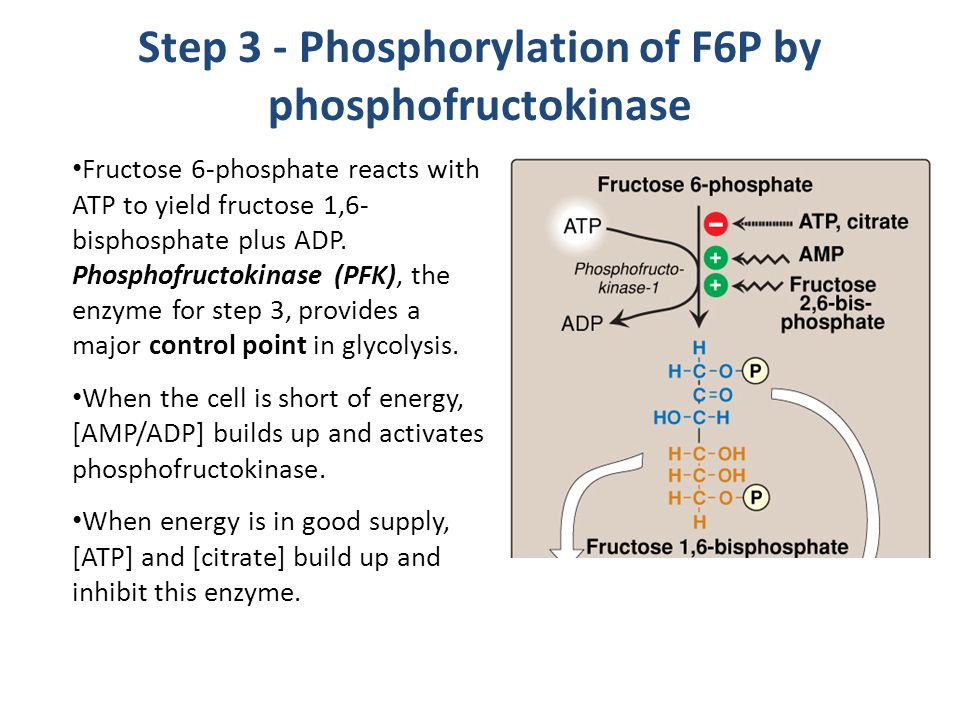 Step 3 - Phosphorylation of F6P by phosphofructokinase