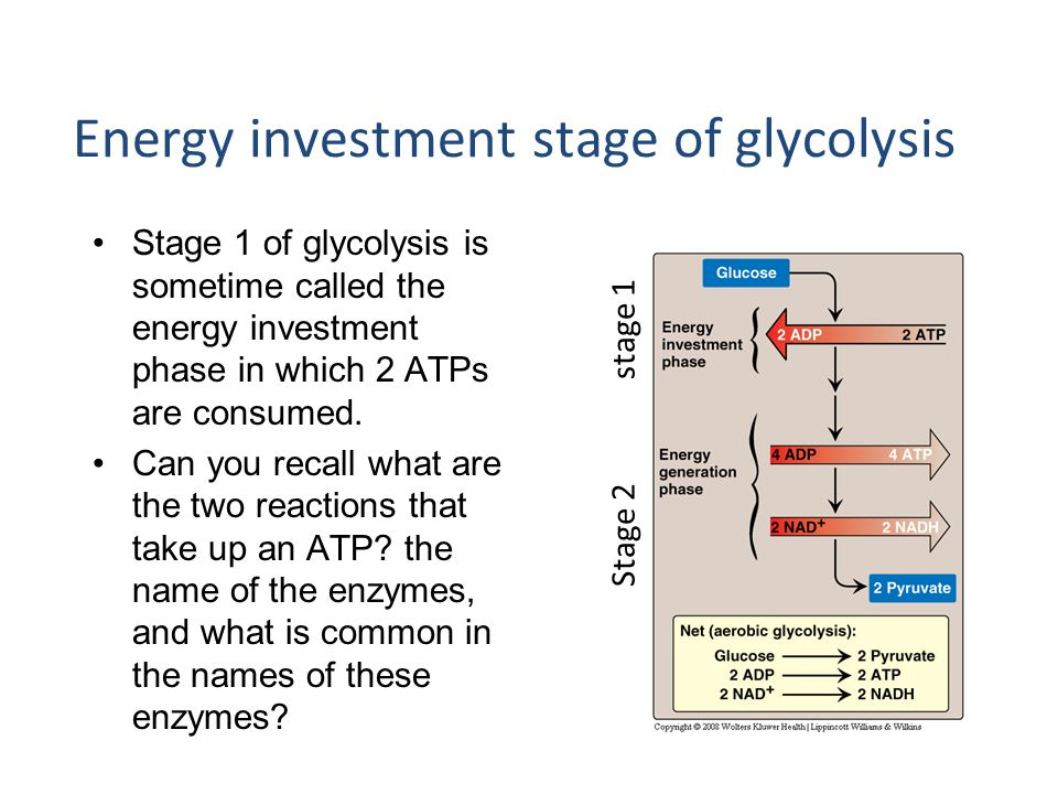 Energy investment stage of glycolysis