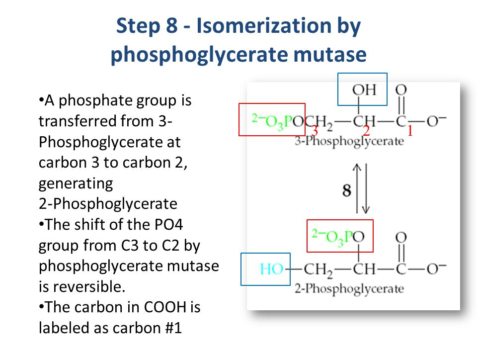 Step 8 - Isomerization by phosphoglycerate mutase