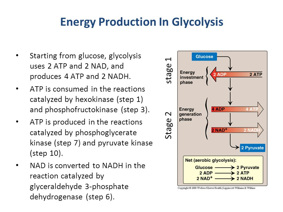Energy Production In Glycolysis