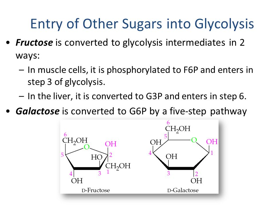 Entry of Other Sugars into Glycolysis