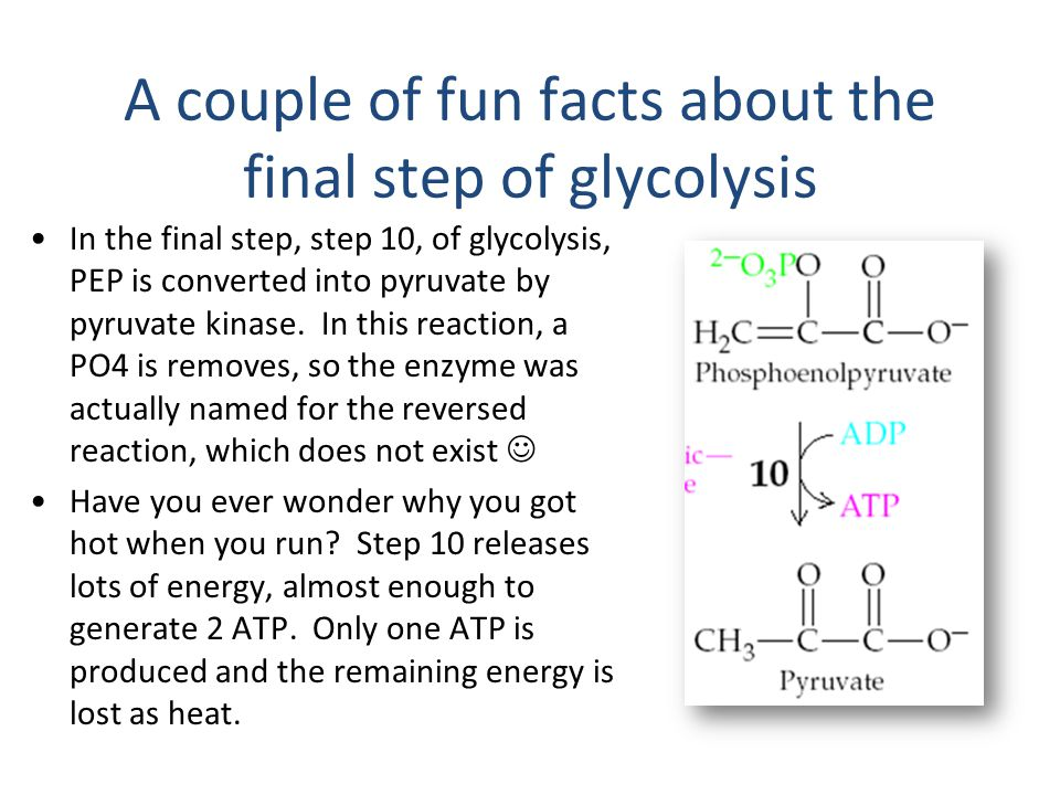A couple of fun facts about the final step of glycolysis