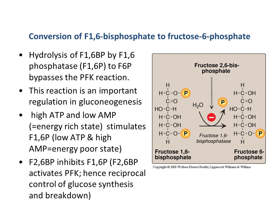 Conversion of F1,6-bisphosphate to fructose-6-phosphate