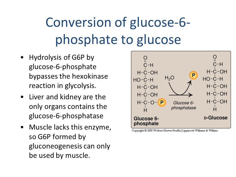 Conversion of glucose-6-phosphate to glucose