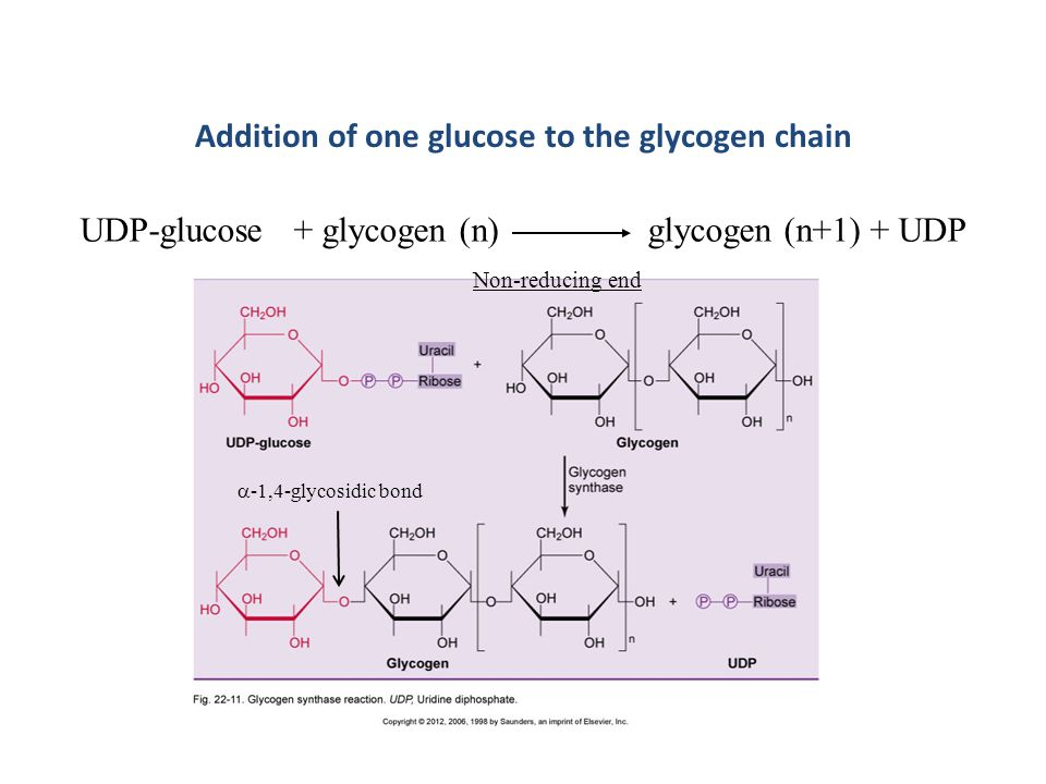 Addition of one glucose to the glycogen chain
