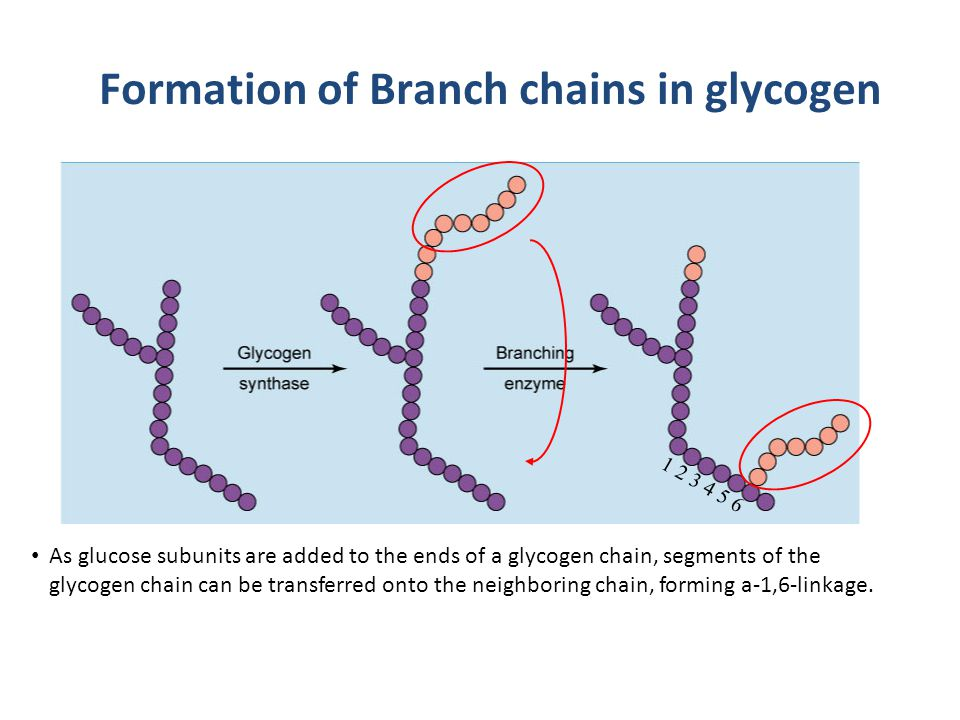 Formation of Branch chains in glycogen