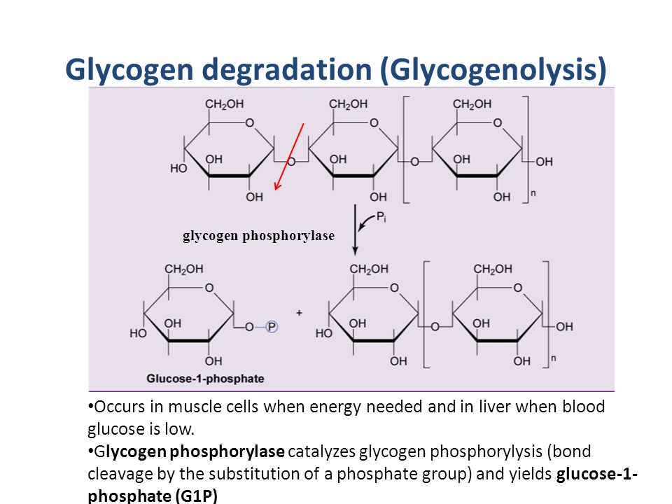 Glycogen degradation (Glycogenolysis)