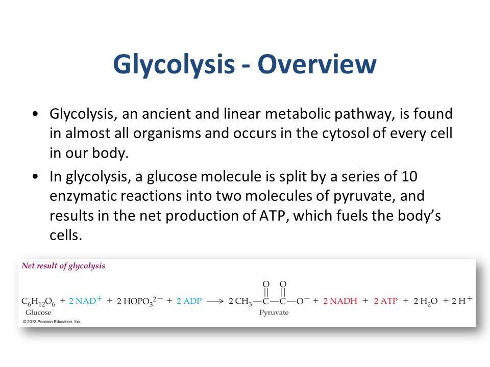 Glycolysis - Overview