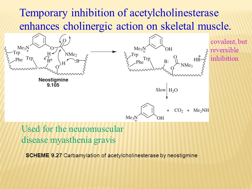 Temporary inhibition of acetylcholinesterase enhances cholinergic action on skeletal muscle.