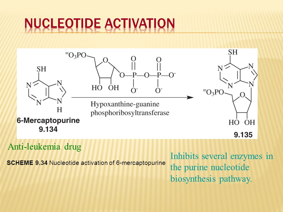 Nucleotide Activation