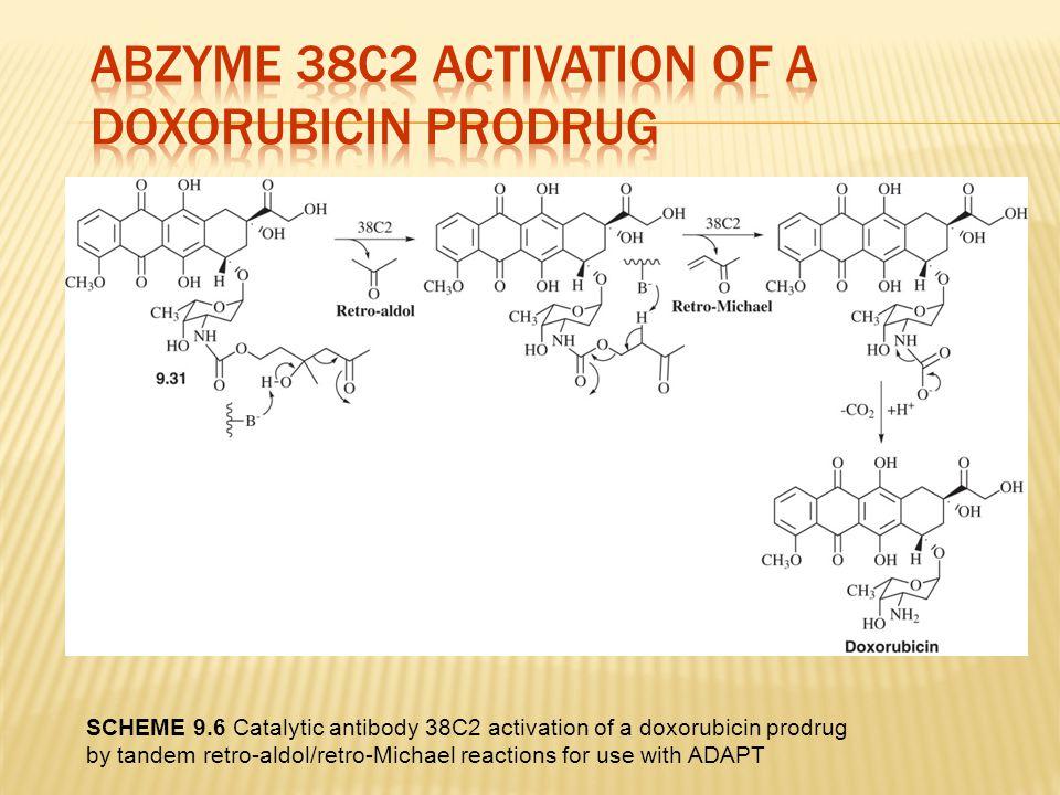 Abzyme 38C2 Activation of a Doxorubicin Prodrug