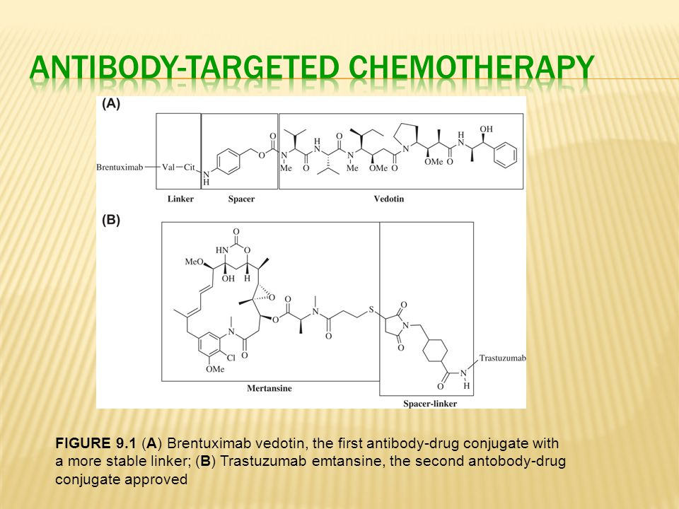 Antibody-Targeted Chemotherapy