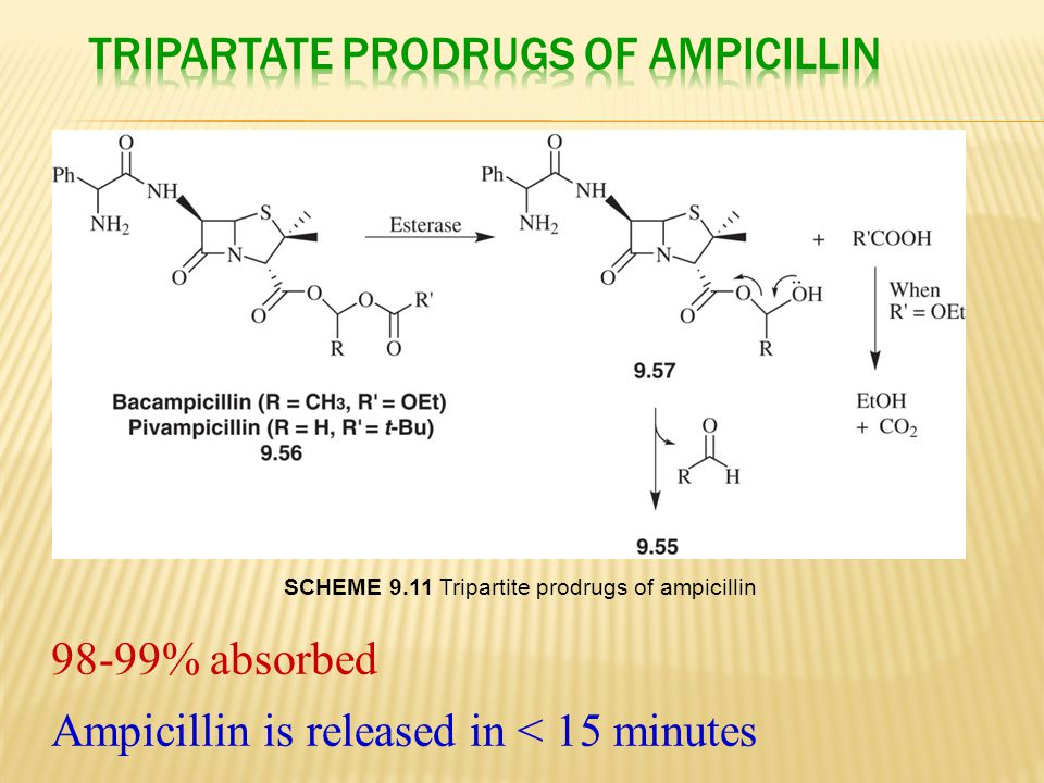 Tripartate Prodrugs of Ampicillin