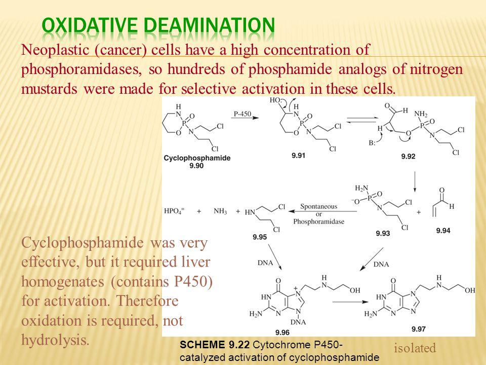 Oxidative Deamination