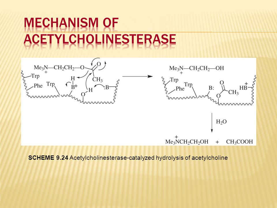 Mechanism of Acetylcholinesterase
