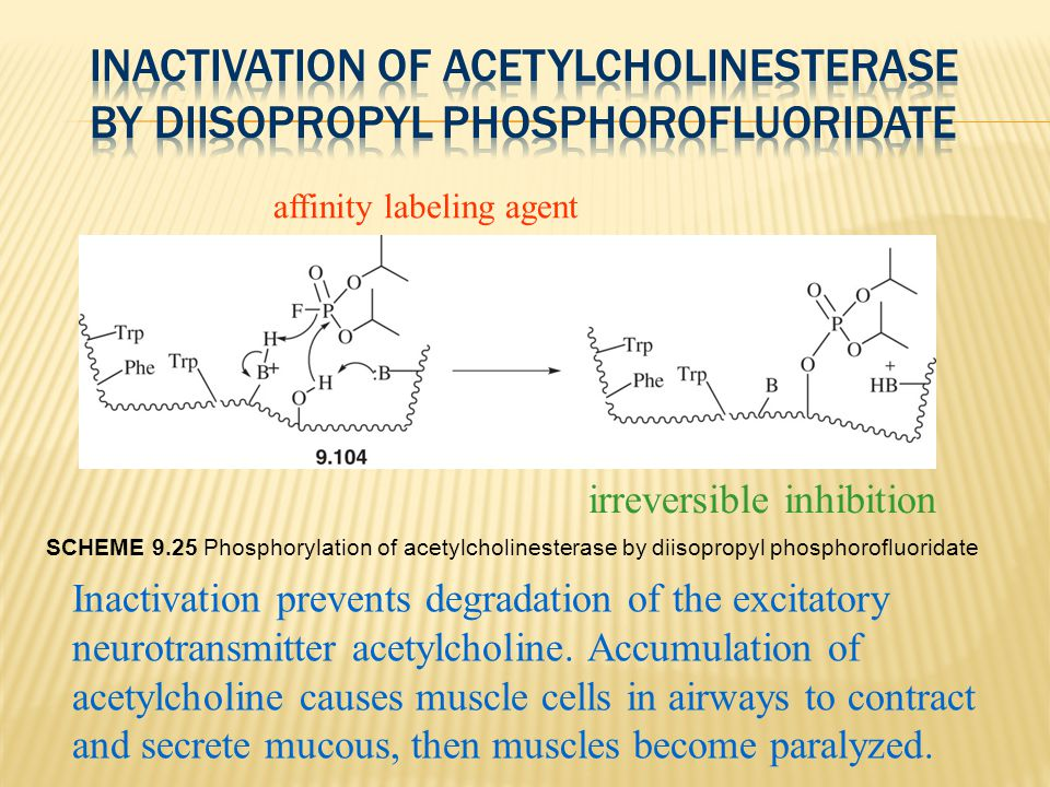 Inactivation of Acetylcholinesterase by Diisopropyl Phosphorofluoridate
