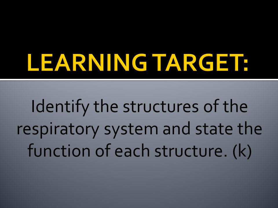 LEARNING TARGET: Identify the structures of the respiratory system and state the function of each structure.
