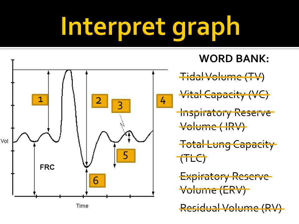 Interpret graph 2 WORD BANK: Tidal Volume (TV) Vital Capacity (VC)