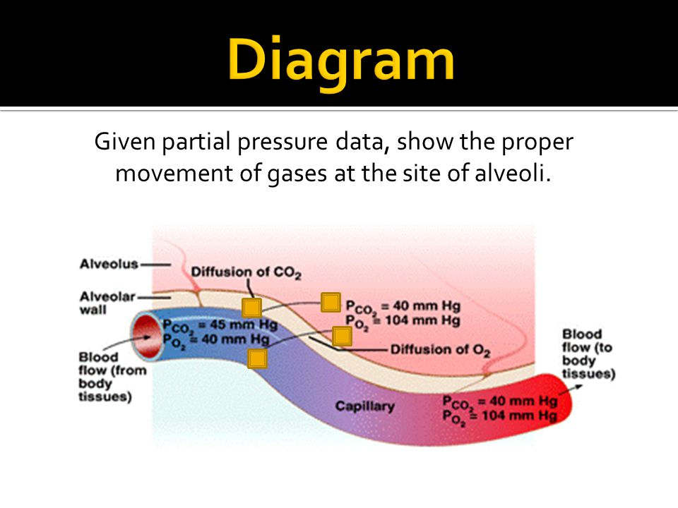 Diagram Given partial pressure data, show the proper movement of gases at the site of alveoli.
