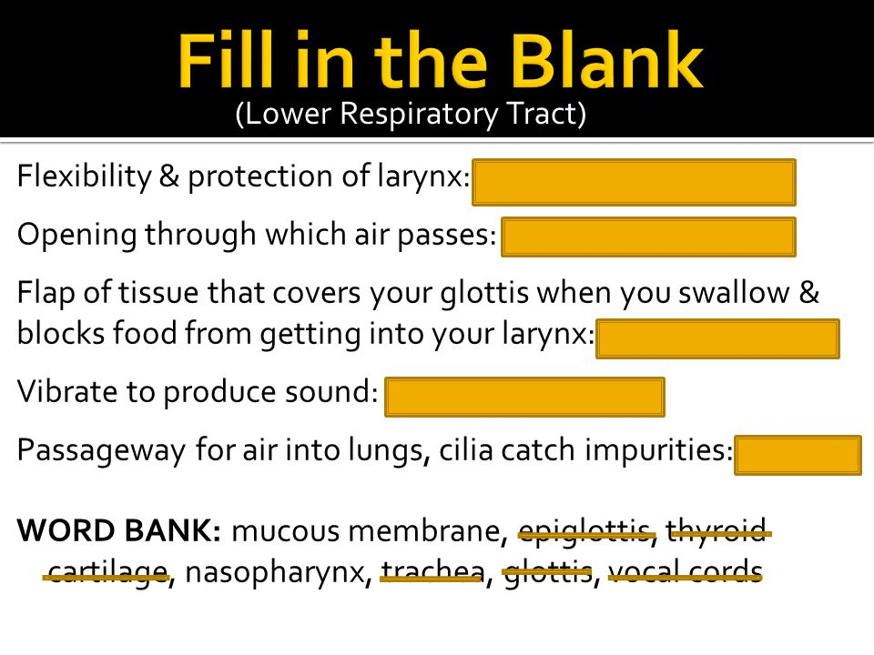 Fill in the Blank (Lower Respiratory Tract)