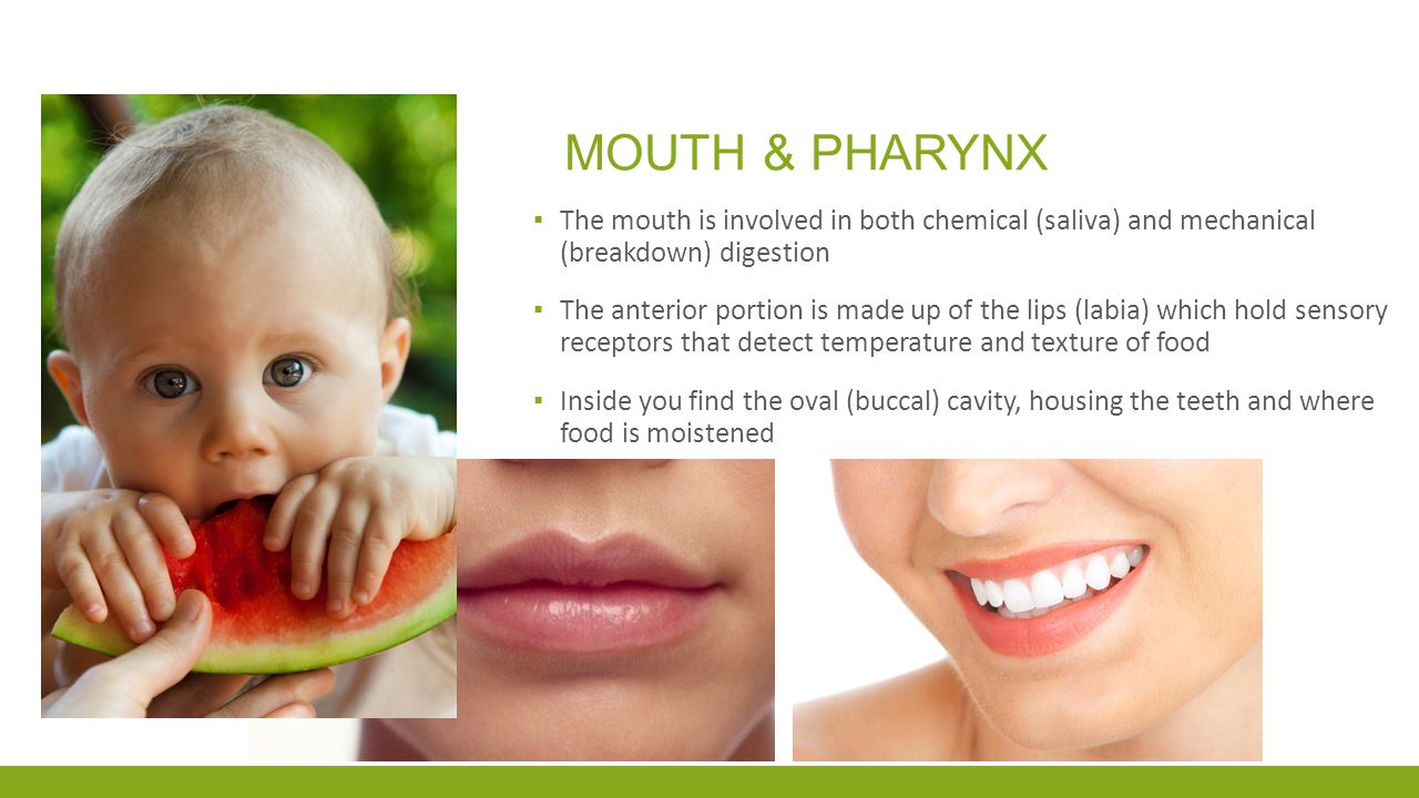 Mouth & pharynx The mouth is involved in both chemical (saliva) and mechanical (breakdown) digestion.